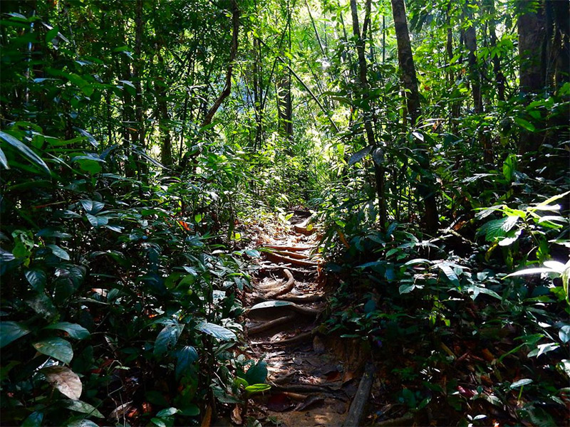 3 Best Hiking Trails in Phuket for Nature Enthusiasts